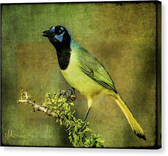Green Jay With Textures Canvas Print