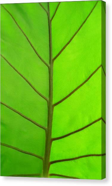Green Leaf Canvas Print by Marcus Adkins