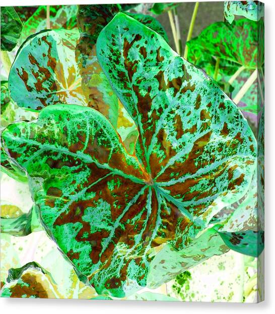 Canvas Print featuring the photograph Green Leafmania 2 by Marianne Dow