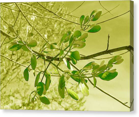 Green Leaves Canvas Print by Russ Mullen