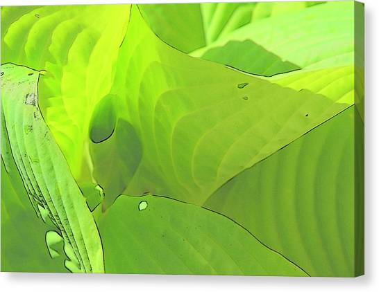 Green Leaves Sketch 2 Canvas Print