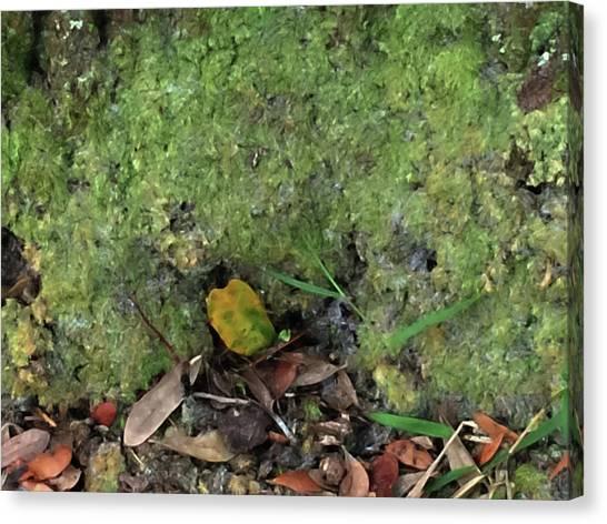 Green Man Spirit Photo Canvas Print