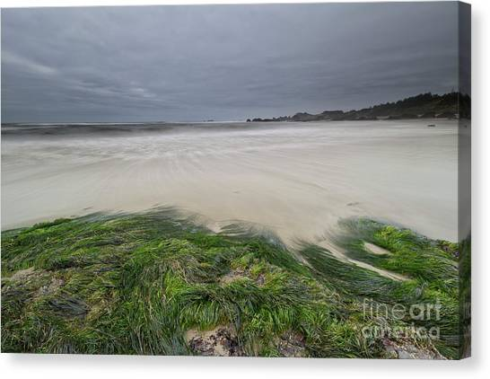 Seagrass Canvas Print - Green by Masako Metz