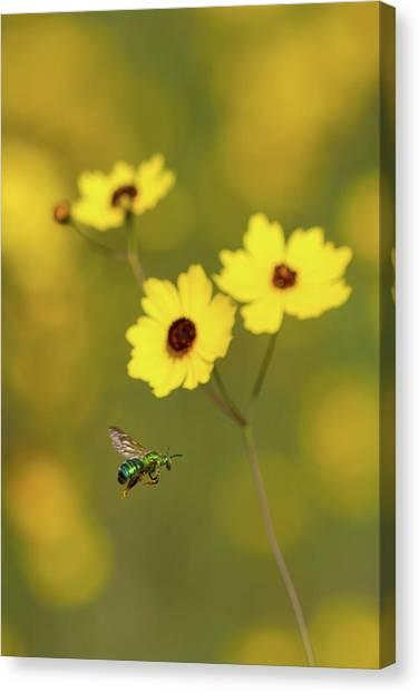 Green Metallic Bee Canvas Print