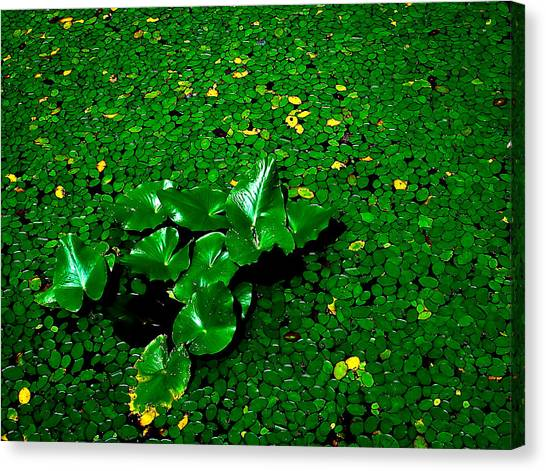 Green On Green Canvas Print by Ron Plasencia