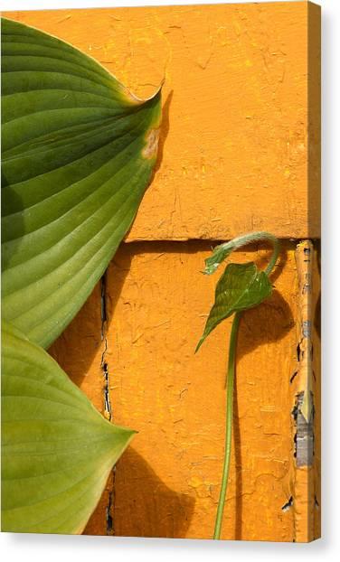 Green On Orange 4 Canvas Print by Art Ferrier
