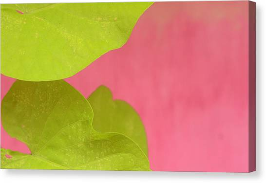 Green On Pink 1 Canvas Print by Art Ferrier