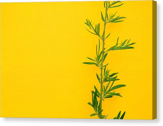 Green On Yellow 5 Canvas Print by Art Ferrier