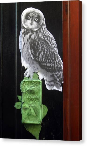 Green Owl Canvas Print by Jez C Self