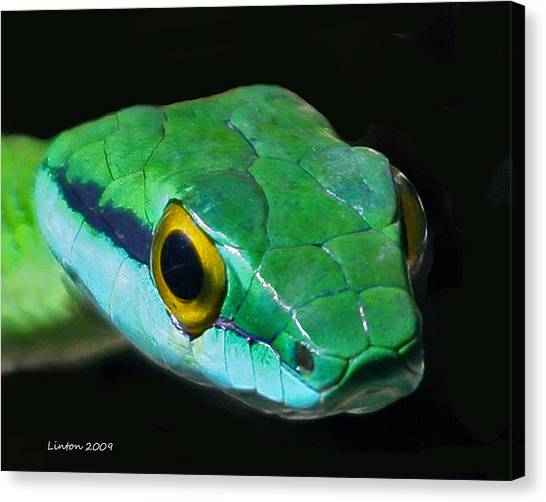 Snake Canvas Print - Green Parrot Snake by Larry Linton