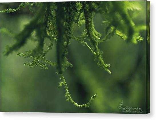 Canvas Print featuring the photograph Flavorofthemonth by Gene Garnace