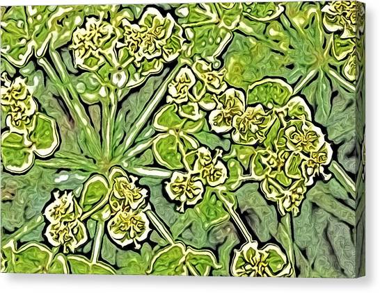 Green Spurge 1 Canvas Print