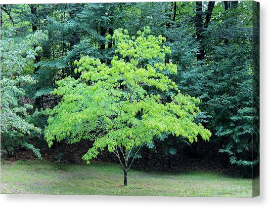 Green Standout Tree Canvas Print