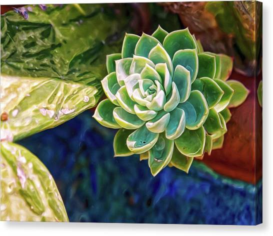 Canvas Print featuring the digital art Green Succulent by Doctor Mehta