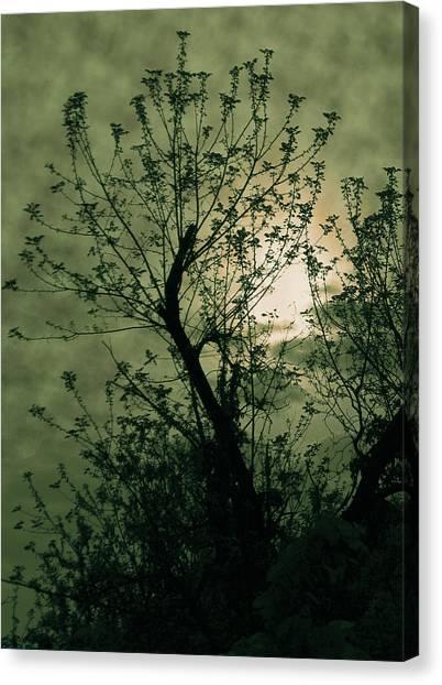 Green Sunset Canvas Print