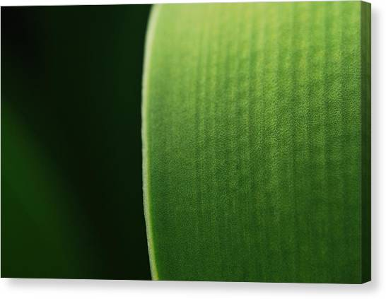 Green Canvas Print by Susette Lacsina