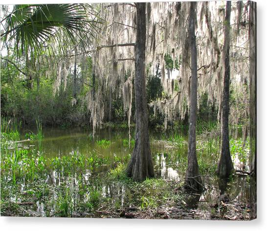 Green Swamp Canvas Print