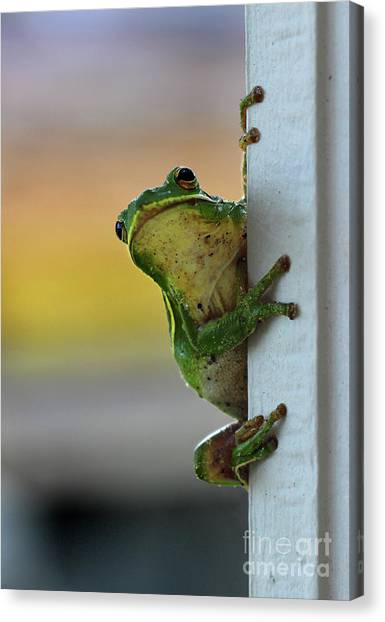 Green Tree Frog  It's Not Easy Being Green Canvas Print