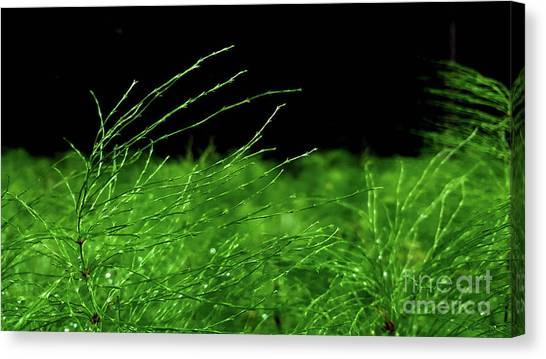 Greener On The Other Side. Canvas Print