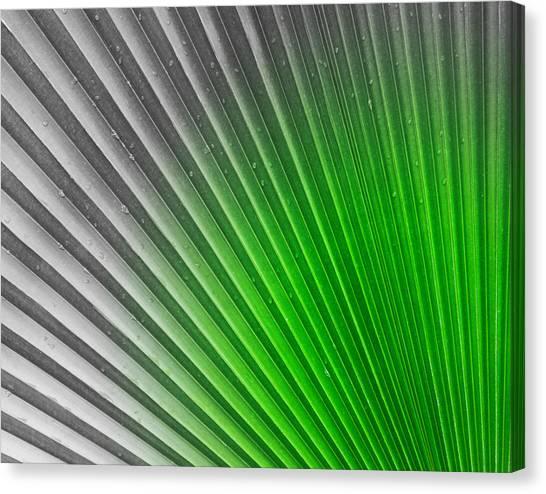 Greenish Palm Canvas Print by Gigi Kobel