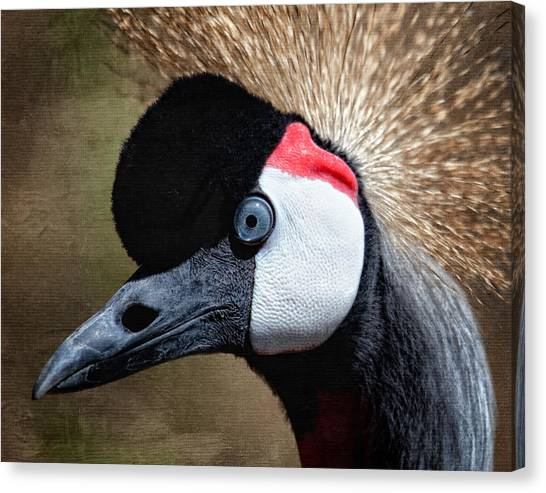 Grey - Crowned Crane Canvas Print