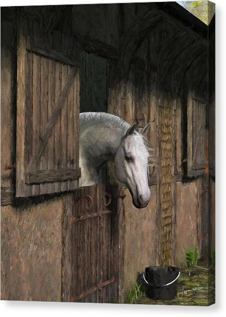 Grey Horse In The Stable - Waiting For Dinner Canvas Print