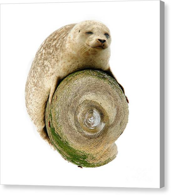 Seal Canvas Print - Grey Seal World by Smart Aviation