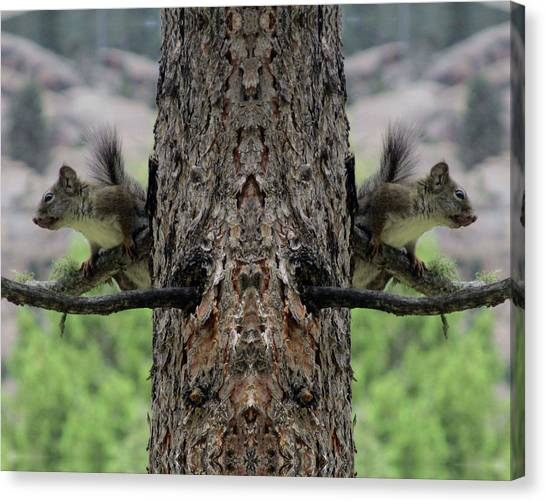 Grey Squirrels On The Look Out Canvas Print