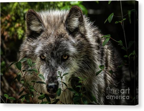 Canvas Print featuring the photograph Grey Wolf by Brad Allen Fine Art