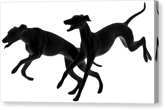 Greyhounds Travelling At 45 Mph Canvas Print