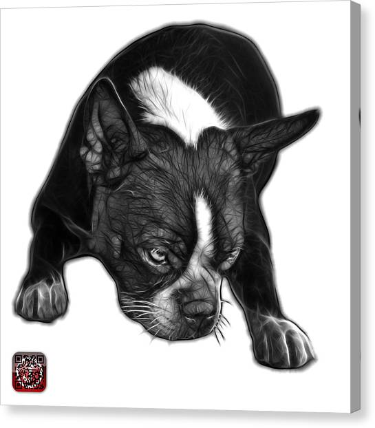 Greyscale Boston Terrier Art - 8384 - Wb Canvas Print