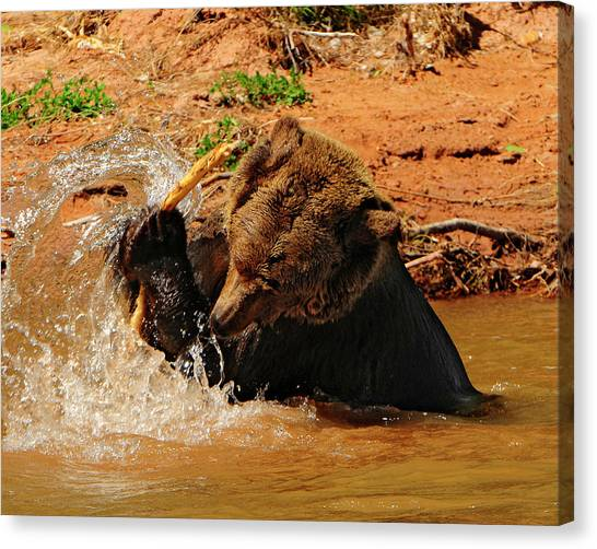 Grizzly At Play Canvas Print by Dennis Hammer