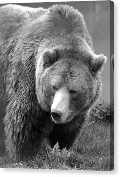 Grizzly Bear And Black And White Canvas Print by Tiffany Vest