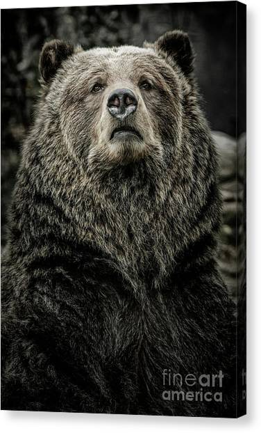 Canvas Print featuring the photograph Grizzly Bear by Brad Allen Fine Art