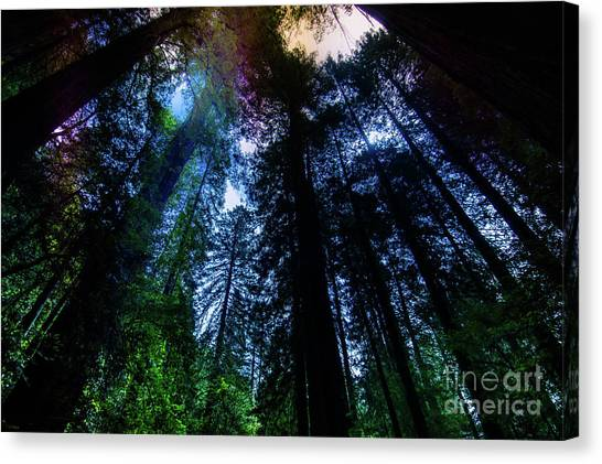 Grizzly Creek Redwood Grove Canvas Print by Blake Webster