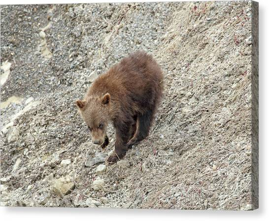 Canvas Print featuring the photograph Grizzly Cub by Jean Clark