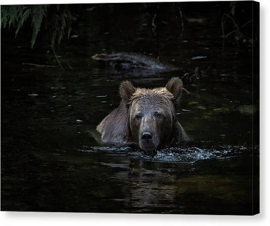 Grizzly Swimmer Canvas Print
