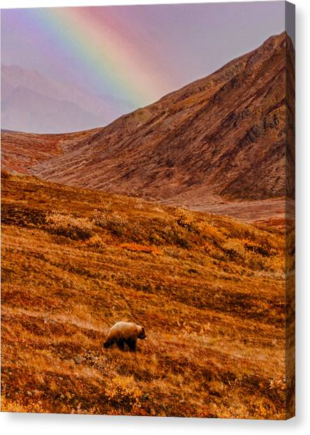 Wild Berries Canvas Print - Grizzly Under The Rainbow by Jeff Folger