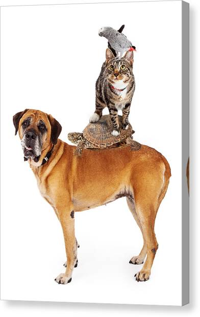 Mastiffs Canvas Print - Grop Of Pets Stacked Up by Susan Schmitz