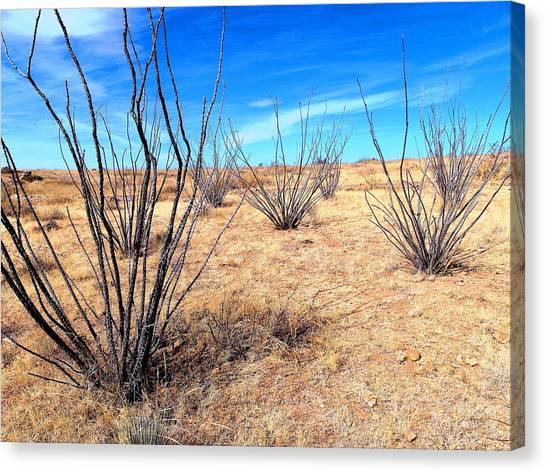 Ground Level - New Mexico Canvas Print