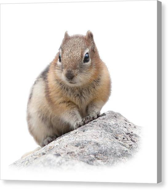 Ground Squirrel T-shirt Canvas Print