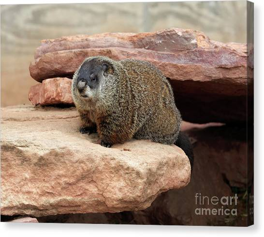 Groundhogs Canvas Print - Groundhog by Louise Heusinkveld