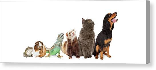 Iguanas Canvas Print - Group Of Pets Looking Up And Side Banner by Susan Schmitz