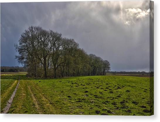 Group Of Trees Against A Dark Sky Canvas Print