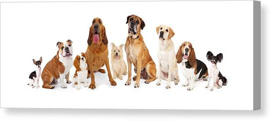 Mastiffs Canvas Print - Group Of Various Size Dogs by Susan Schmitz