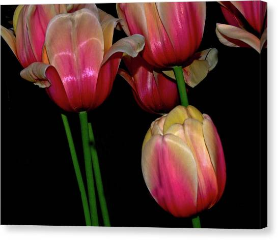 Grouping Ofpink And Yellow Tulips Canvas Print