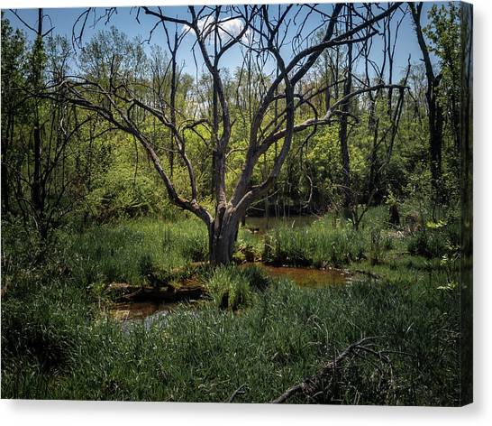 Growning From The Marsh Canvas Print
