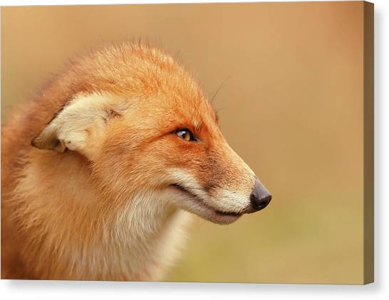 Submission Canvas Print - Grumpy Fox Is Grumpy by Roeselien Raimond