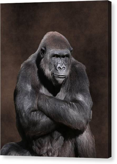 Grumpy Gorilla Canvas Print