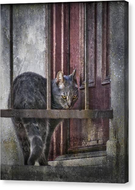 Grunge Cat Canvas Print